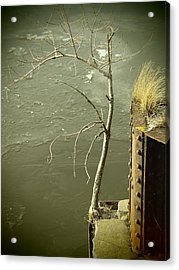 Adversity Acrylic Print by Thomas Young