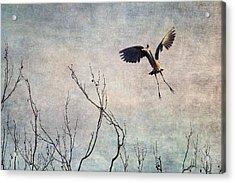 Aerial Dance Acrylic Print