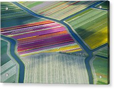 Aerial View Of Flower Fields In Spring Acrylic Print by Frans Sellies