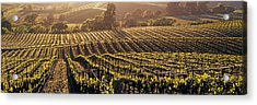 Aerial View Of Rows Crop In A Vineyard Acrylic Print by Panoramic Images