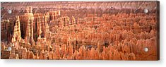 Aerial View Of The Grand Canyon, Bryce Acrylic Print by Panoramic Images
