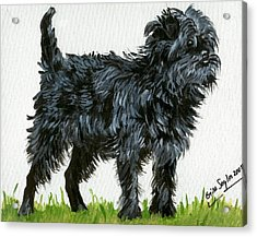 Affenpinscher Dog Acrylic Print by Olde Time  Mercantile