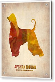 Afghan Hound Poster Acrylic Print by Naxart Studio