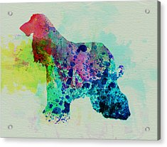 Afghan Hound Watercolor Acrylic Print by Naxart Studio
