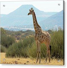 Africa, Namibia, Damaraland, Palwag Acrylic Print