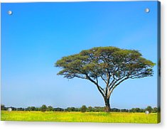 Africa Acrylic Print by Sebastian Musial
