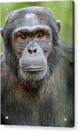 Africa, Uganda, Kibale Forest National Acrylic Print