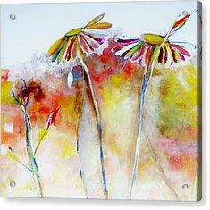 African Daisy Abstract Acrylic Print by Lisa Kaiser