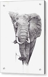 African Elephant  Acrylic Print by Andrew Harrison