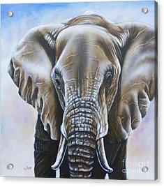 African Elephant Acrylic Print by Ilse Kleyn