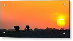 Acrylic Print featuring the photograph African Elephant Sunset by Amanda Stadther