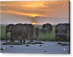 African Elephants At Sunset Acrylic Print by 1001slide