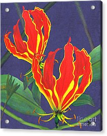 African Flame Lily Acrylic Print by Sylvie Heasman
