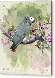 African Gray Among The Blossoms Acrylic Print by Betty LaRue
