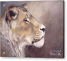 African Lioness On Alert Acrylic Print by Suzanne Schaefer