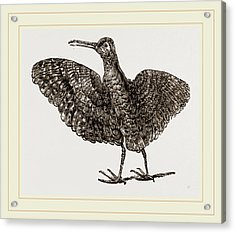 African Painted Snipe Acrylic Print by Litz Collection