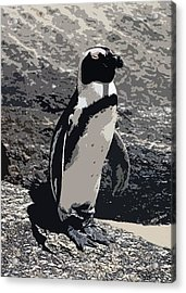 African Penguin Portrait Acrylic Print by Olde Time  Mercantile
