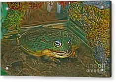 African Pixie Frog In Water Acrylic Print