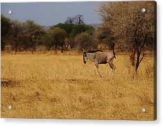 African Series Grass Acrylic Print by Katherine Green