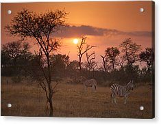 African Sunrise Acrylic Print by Craig Brown