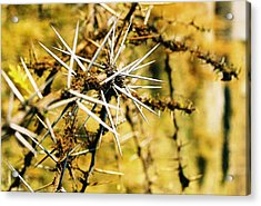 Acrylic Print featuring the photograph African Thorns by Carlee Ojeda