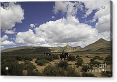 African Trail Ride Acrylic Print