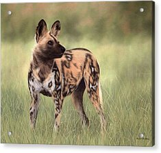 African Wild Dog Painting Acrylic Print by Rachel Stribbling