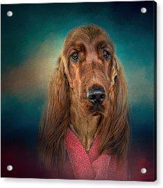 After A Swim - Irish Setter - Dog Art Acrylic Print