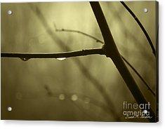 After It Rained Acrylic Print by David Gordon