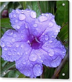 Acrylic Print featuring the photograph After The Rain #1 by Robert ONeil