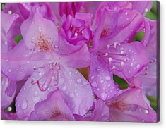 After The Rain Acrylic Print by Aimee L Maher Photography and Art Visit ALMGallerydotcom