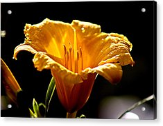 After The Rain Flower 1 Acrylic Print by Mark Russell