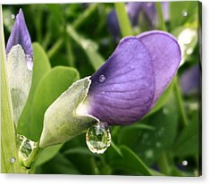 Acrylic Print featuring the photograph After The Rain by Gigi Dequanne