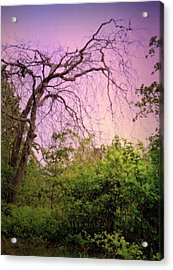 Acrylic Print featuring the photograph After The Rain by Jim Whalen