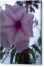 After The Rain Acrylic Print by K Simmons Luna
