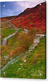 After The Rain - Moorland Streams Acrylic Print