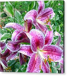 After The Rain Acrylic Print by Sandra Estes