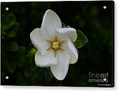 Acrylic Print featuring the photograph After The Rain by Tannis  Baldwin