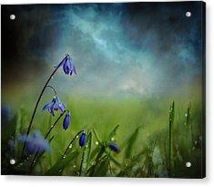 After The Spring Rain Acrylic Print