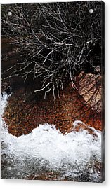 After The Thaw Acrylic Print by The Forests Edge Photography - Diane Sandoval