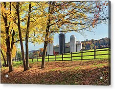 Afternoon Delight Acrylic Print by Bill Wakeley