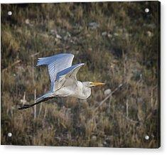 Afternoon Flight Acrylic Print