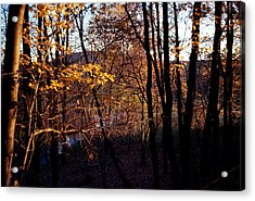 Afternoon Foliage Acrylic Print by Brian Lucia