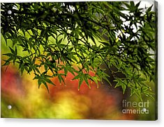 Afternoon Glow Acrylic Print
