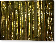 Acrylic Print featuring the photograph Afternoon In Sagano by Brad Brizek
