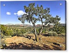 Afternoon Light In Sedona Arizona Acrylic Print by James Steele