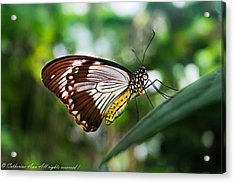 Afternoon Rest Acrylic Print