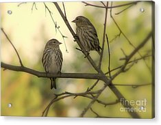 Afternoon Sit Acrylic Print by Leone Lund