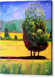 Afternoon Sun Acrylic Print by Nancy Merkle