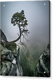 Against The Odds Acrylic Print by Andreas Wonisch